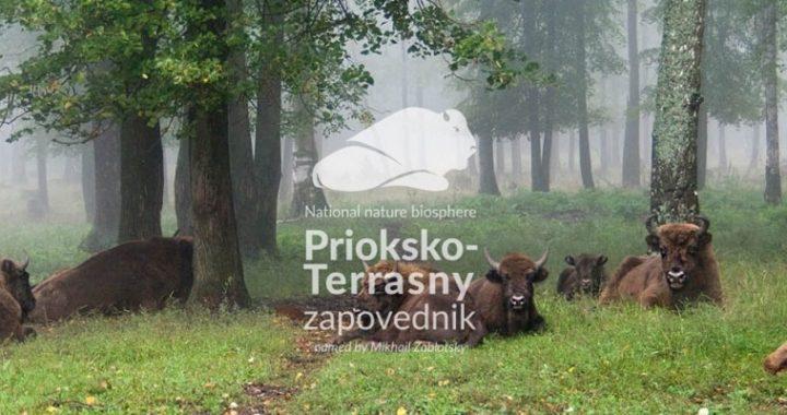 WWFF expedition R3ARS to Prioksko-Terrasny Reserve 29 September - 2 October 2020