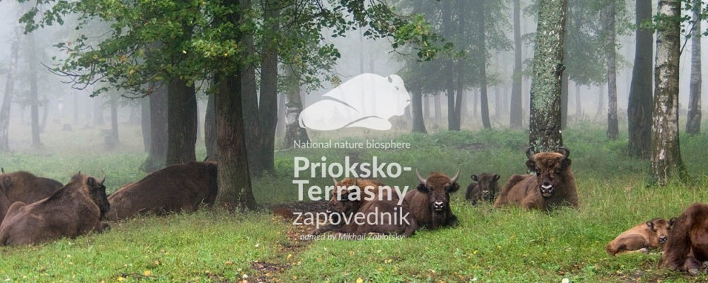 WWFF expedition R3ARS to Prioksko-Terrasny Reserve 29 September - 2 October 2020